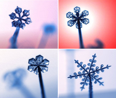 The Physics of Snowflakes